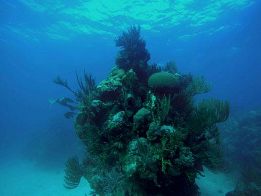 Buceo en Playa Coral