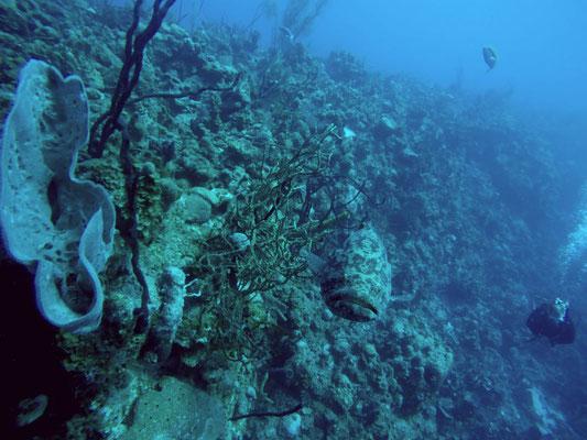 Wall Diving in Punta Perdiz