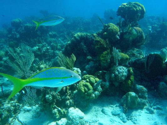 Scuba diving Punta Perdiz