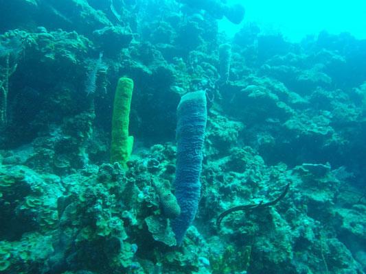 Diving in Punta Perdiz