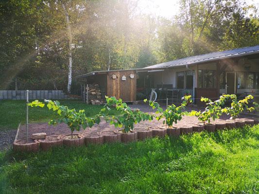Unsere Hütte mit den neu gepflanzen Weinreben