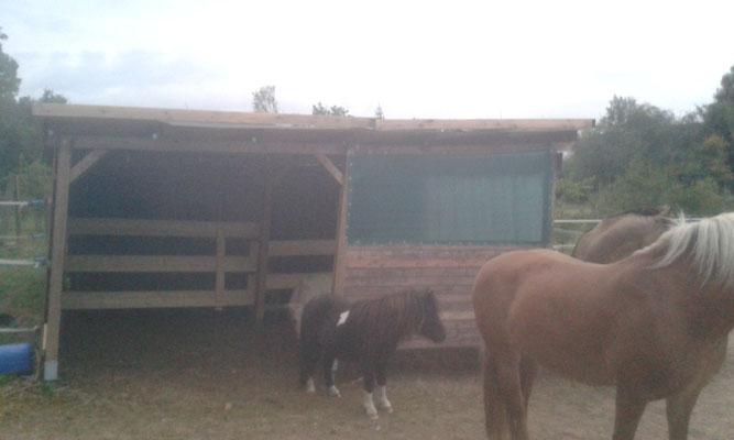 """Daher wurde sie """"nur"""" neu verkleidet. Die Pferde finden es prima."""