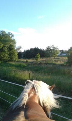 Tonja genießt die Aussicht.