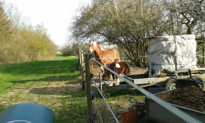 Die Pferde freuen sich, gleich auf die Weide zu gehen :-)