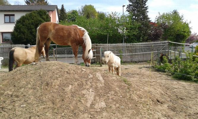 Die gucken dem Gras echt beim Wachsen zu, hehe...