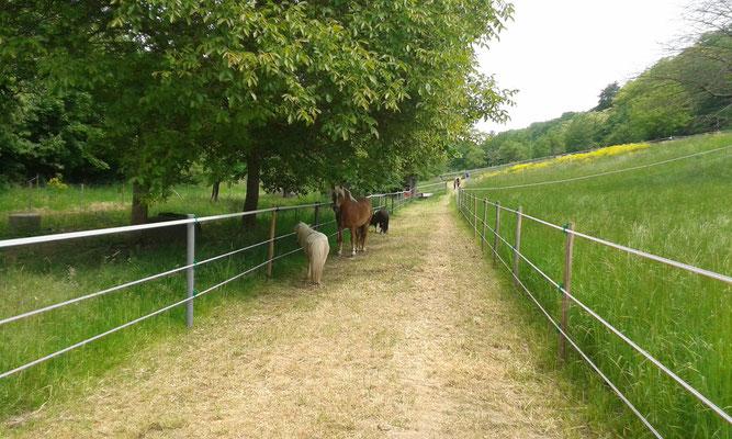 Links ist das Nachbargrundstück, rechts unser Mittelteil mit Gras.