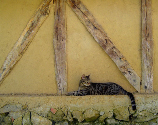 Un de nos chats....