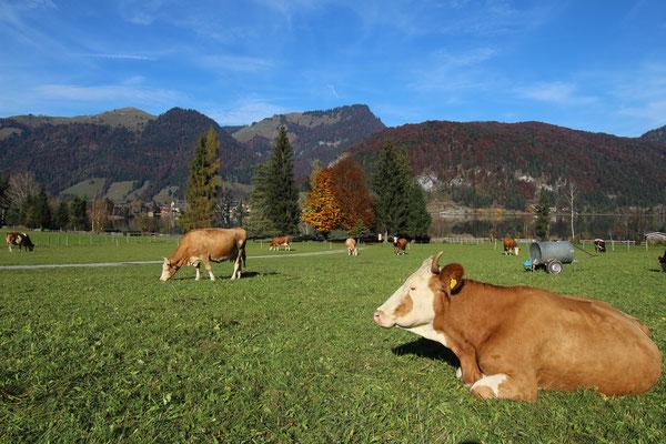Festival Area @ STOABEATZ Festival Walchsee Tirol