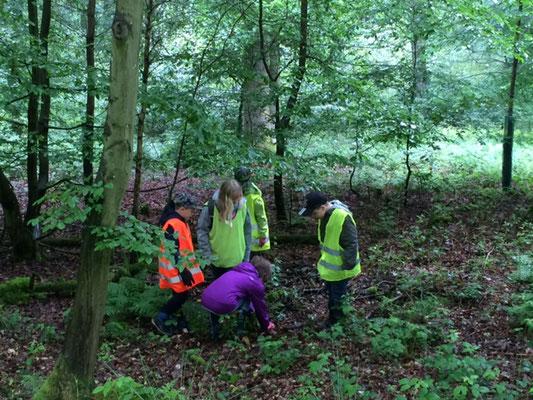 Gruppe 1 sucht tief im Wald nach Müll.