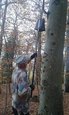 Rolf holt einen Kasten vom Baum.