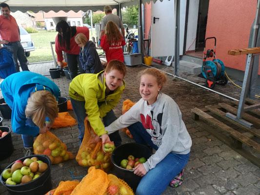 Die Kinder füllen die Äpfel in Eimer um.