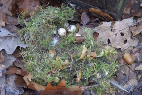 Ein Nest, welches nicht komplett bebrütet wurde.