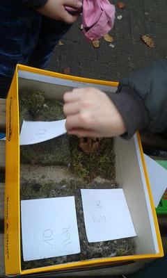 Die Nester werden nummeriert und mitgenommen.