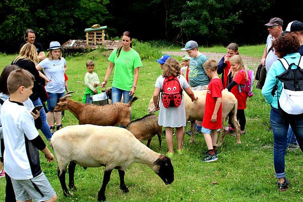Die Kinder sind von der Schafsherde begeistert.