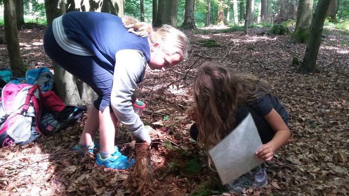 Die Kinder suchen unterm Totholz nah Insekten.