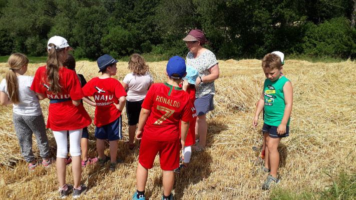 Die Kinder stehen im frisch geernteten Feld.