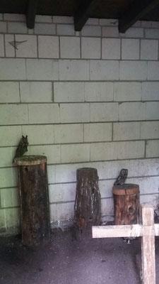 Waldohreule und Waldkautz mit gebrochenen Flügeln.