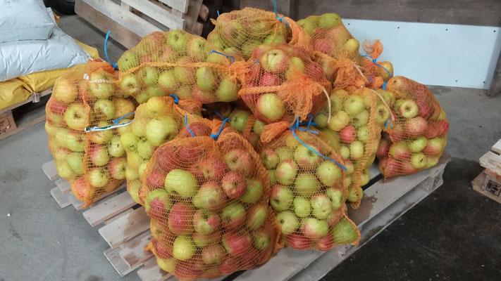 Diese Äpfel galt es zu pressen.