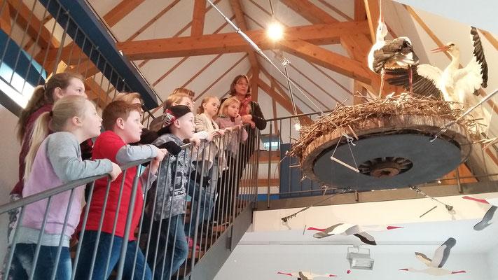 Als erstes zeigt sie uns ein Nest mit ausgestopften Störchen