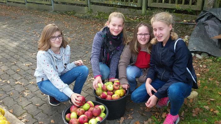 Elisa, Lana, Joy und Saskia (v.l.n.r.) füllen die Äpfel in Eimer.