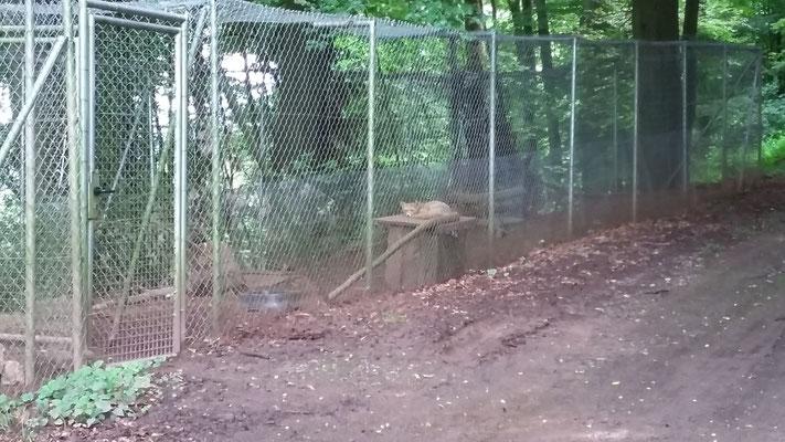 Das Fuchsgehege.