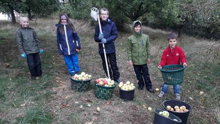1Die NAJU Kids beim Äpfel pflücken.