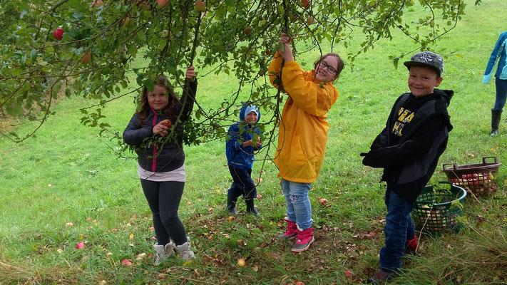 Die Kinder beim Äpfel pflücken.