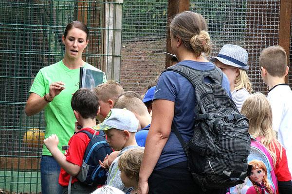 Die Tierpflegerin erzählt uns wie der Puma zu ihnen kam.