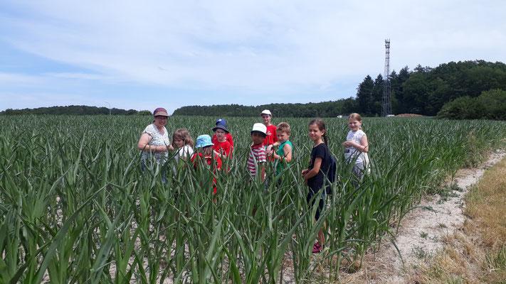 Die Gruppe im Maisfeld.
