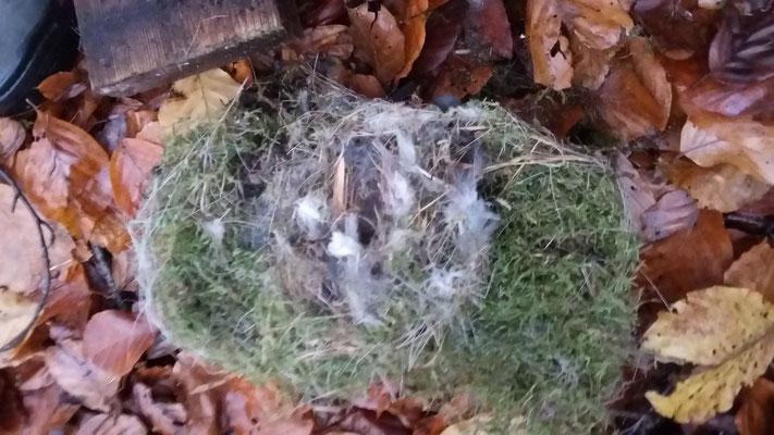 Ein Nest aus Moos und vielen Federn.