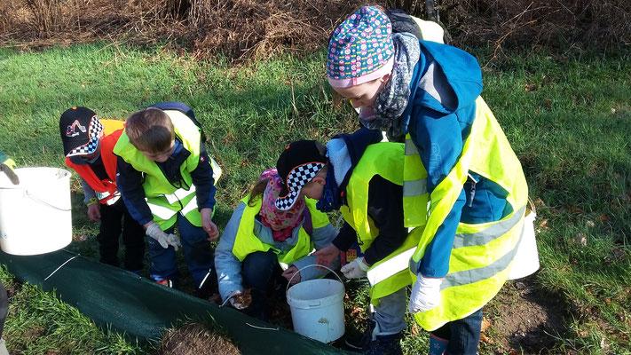 Die Kinder kontrollieren selbständig die Eimer hinter dem Krötenzaun.