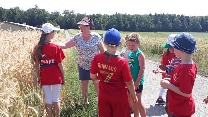 Die Kinder lernen den Unterschied zwischen Weizen und Gerste.