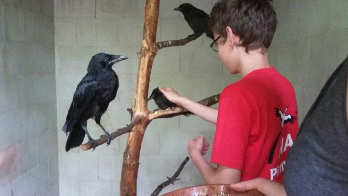 Lukas kann sogar einen Vogel streicheln.
