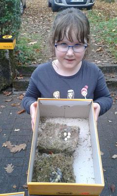 Auch Joy hat Nester gesammelt.