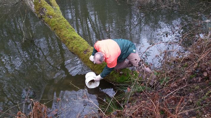Herr Braun setzt die Kröten vorsichtig ins Wasser
