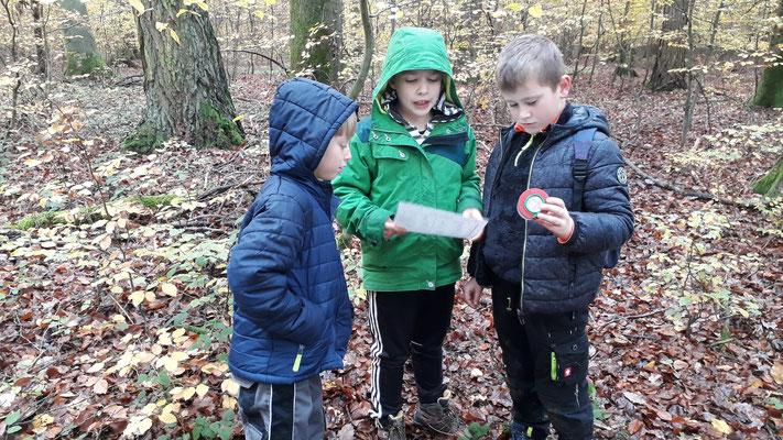 Anhand des Bestimmungsblatts können die Kinder feststellen um welches Tier es sich handelt.