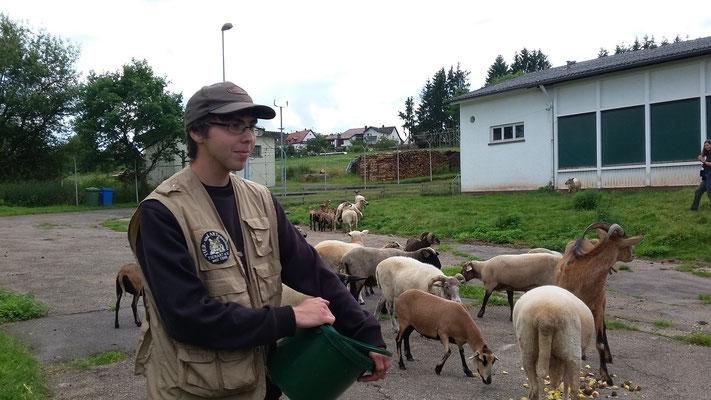 Wir sind bei der Schafherde angelangt.