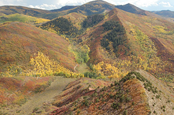Colorado helicopter tours, fall color