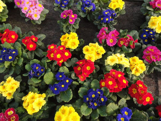 Beet Und Balkonpflanzen Gartnerei Und Blumen Kreitmeyer