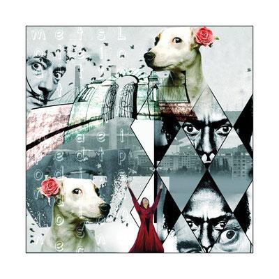 Collages Vie de Chien