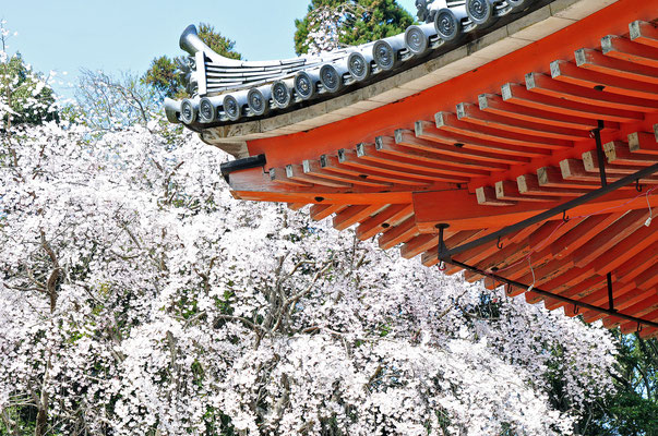 Daigo-ji Temple - Kyoto