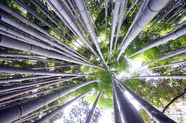 Arashiyama Bamboo Groove - Kyoto