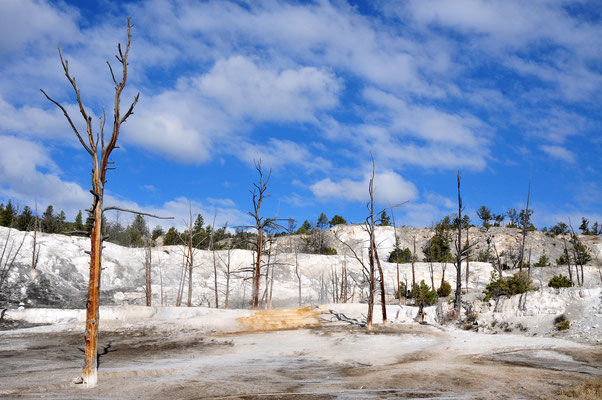 Mammoth Hot Springs / Yellowstone National Park, Wyoming
