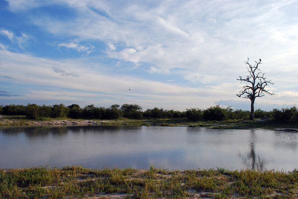 Elephant Sands,Botswana