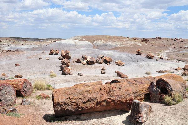 Petrified Forest National Park & Painted Desert, Arizona (Petrified wood 200 million years old)