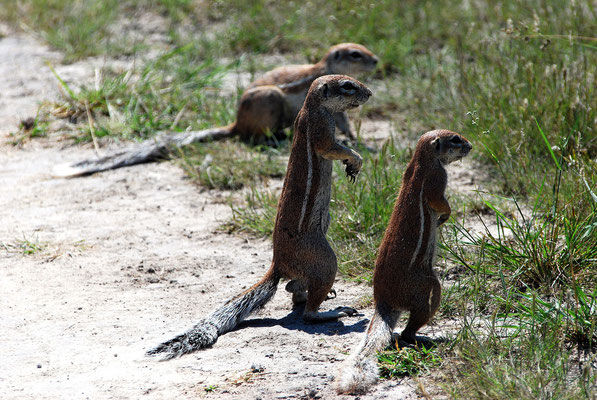 Chobe Game Reserva,Botswana