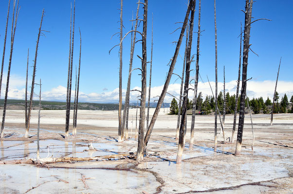 Lower Geyser Basin / Yellowstone National Park, Wyoming