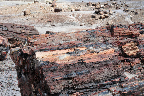 Petrified Forest National Park & Painted Desert, Arizona (Petrified wood 200 million years old)