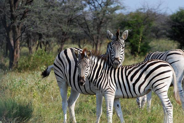 Kahma Ryno Sanctuary,Botswana