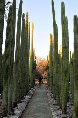 Jardin Botanico,Oaxaca